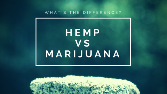 Whats the difference between hemp and marijuana? Learn about legal marijuana at Greenito