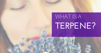 Greenito Learn what is a terpene