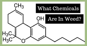 What Chemicals Are In Weed? Greenito
