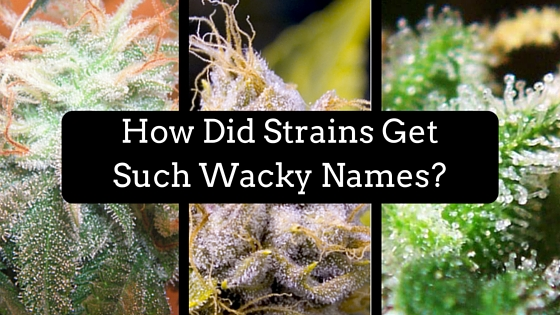 How Did Strains Get Such Wacky Names? Greenito