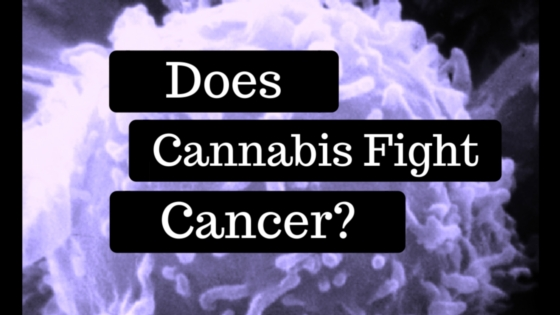 Does Cannabis Fight Cancer? Greenito