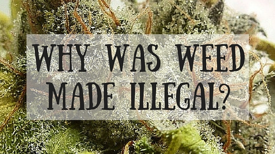 Why Was Weed Made Illegal? Greenito