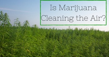 Is Marijuana Cleaning the Air Greenito