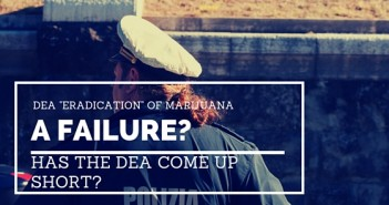 DEA ERADICATION OF MARIJUANA